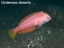Undersea Deserts - Paul Kay